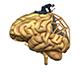 Concussion Rehab